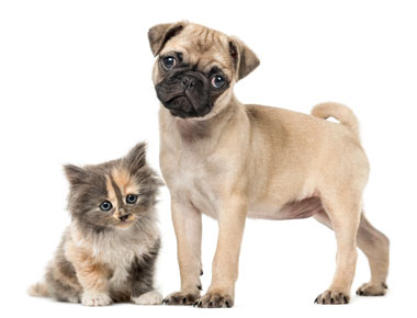 Cats and dogs capture attention in advertising and direct marketing .